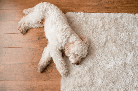 pet odor removal cedar park